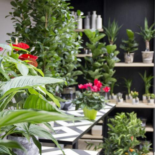 mobilier présentation fleurs plantes