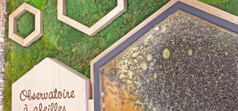 Mur végétal abeilles - Famille Mary